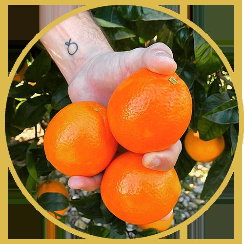fruteate-exportacion_comercializacion_naranjas_y_exprimidores